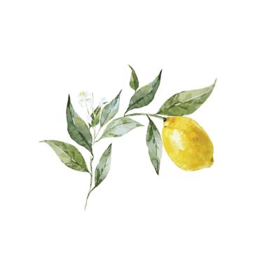 Lemontree-Paper-Co-plain badge 2